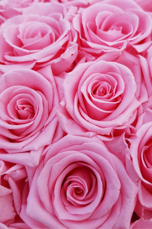 Diy Deko Idee Die Ewige Rosenbox Zum Selber Kreieren